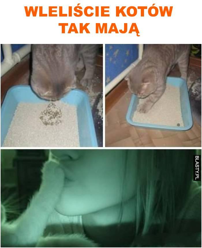 wleliście kotów tak mają