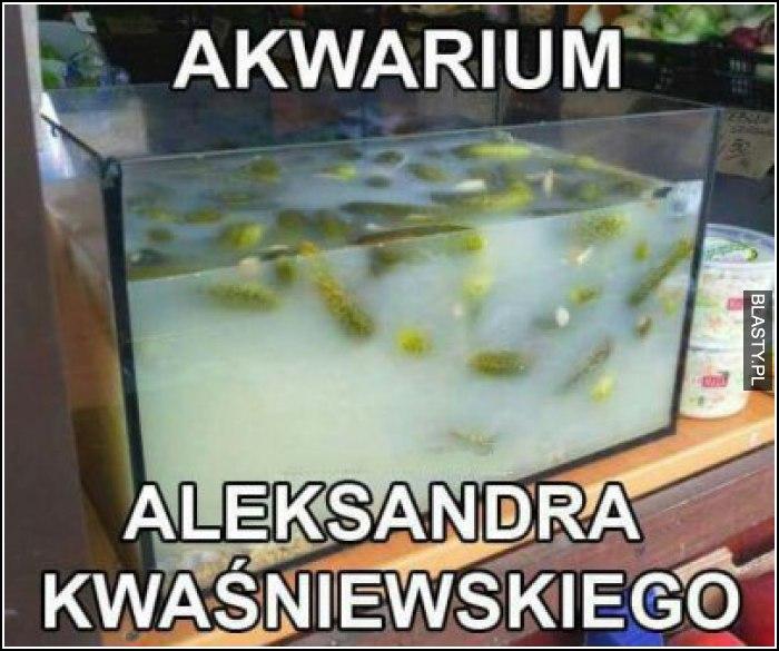 Akwarium aleksandra kwaśniewskiego