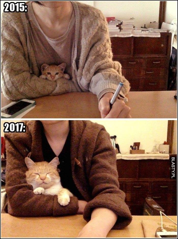 jak wygląda kot po latach