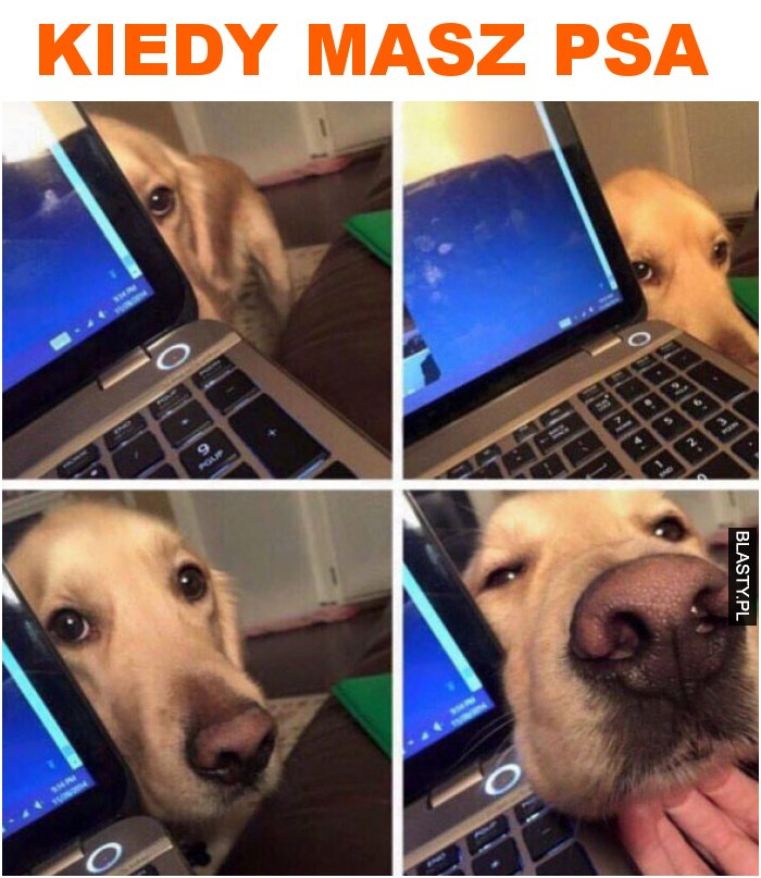 kiedy masz psa