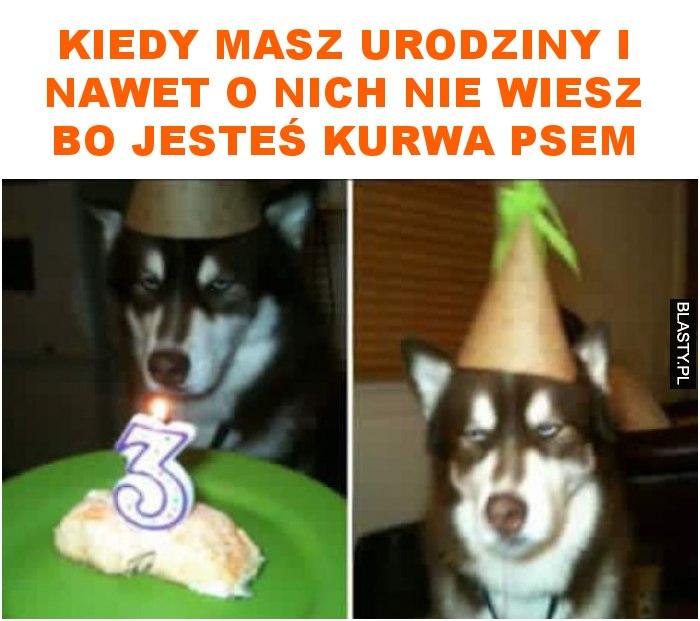 kiedy masz urodziny i nawet o nich nie wiesz bo jesteś kurwa psem