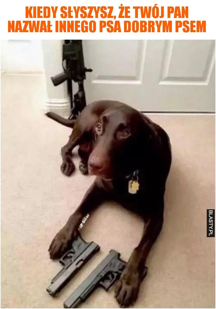 Kiedy słyszysz, że Twój pan nazwał innego psa dobrym psem