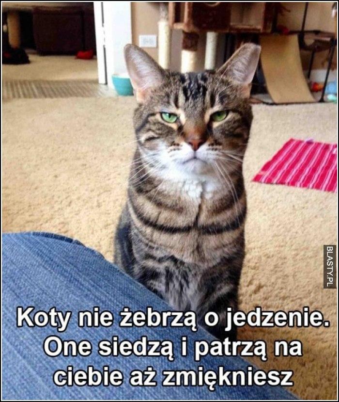 20 Memów Jedzenie Dla Kota Najlepsze śmieszne Memy I Demotywatory