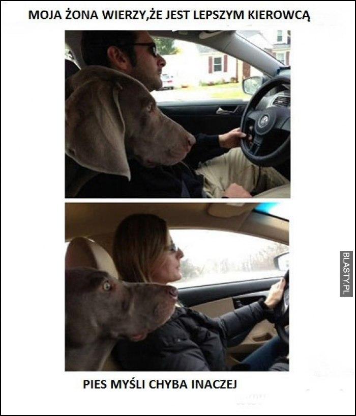 moja żona wierzy, że jest lepszym kierowcą