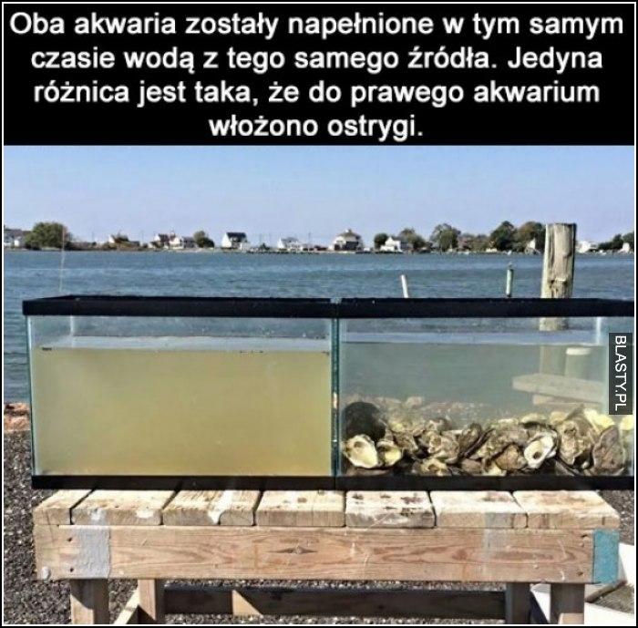 Ostrygi w akwarium