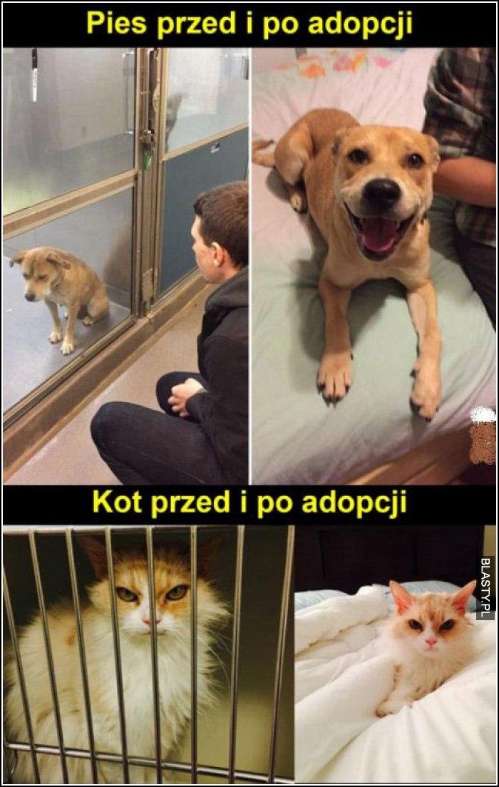 pies przed i po adopcji