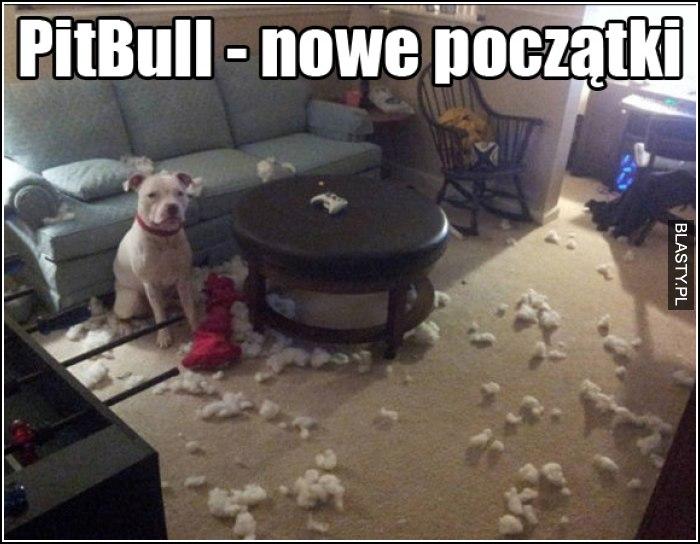 PitBull - nowe początki