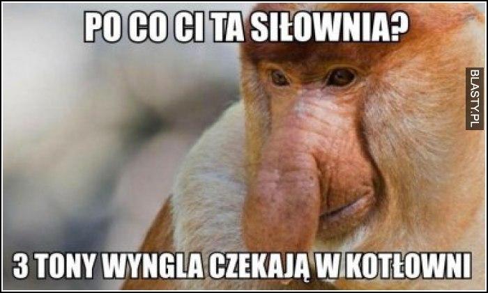 po-co-ci-ta-silownia_2017-04-17_22-07-42.jpg