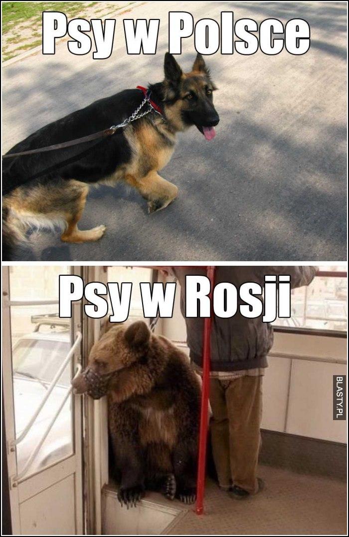 Psy w Polsce