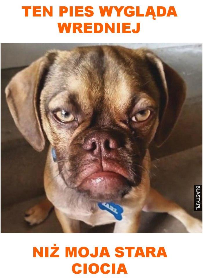 ten pies wygląda wredniej niż moja stara ciocia