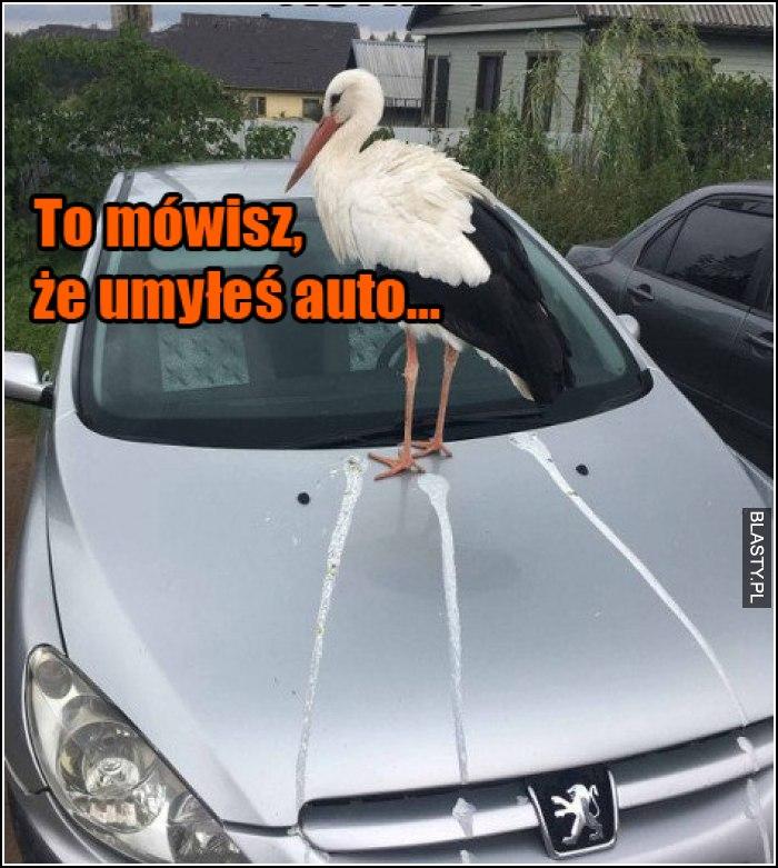 To mówisz, że umyłeś auto...?