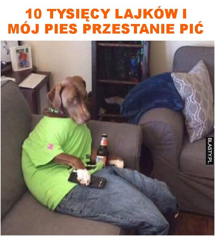 10 tysięcy lajków i mój pies przestanie pić