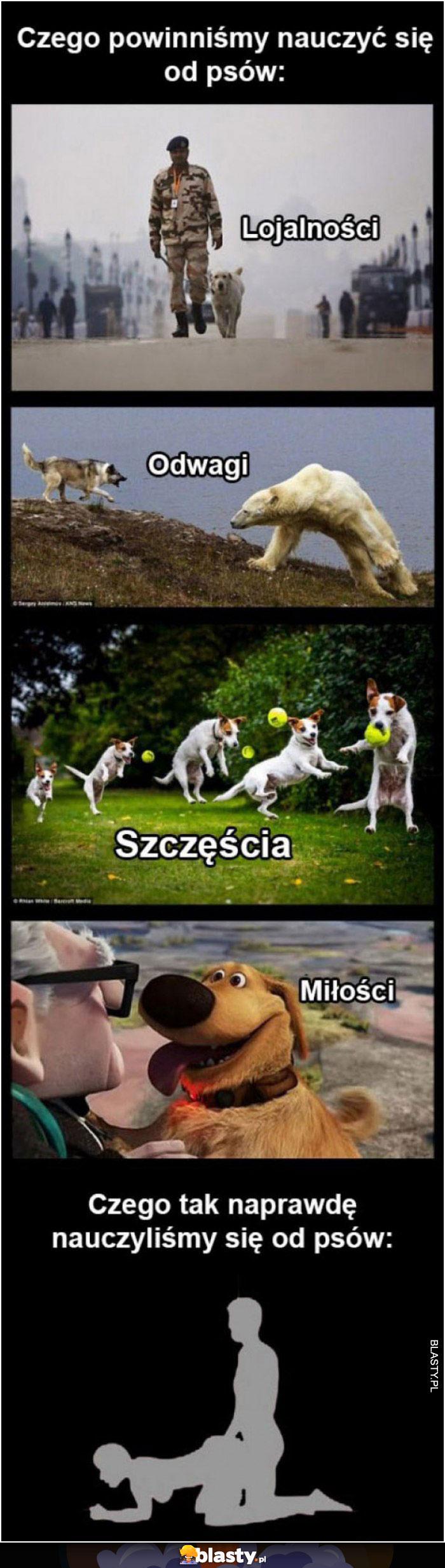 Czego powinniśmy nauczyć się od psów