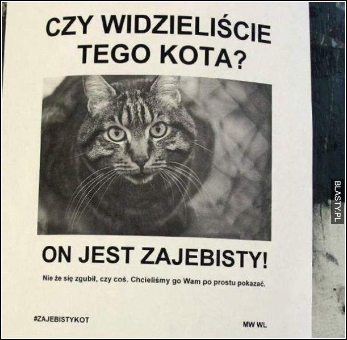 Czy widzieliście tego kota?