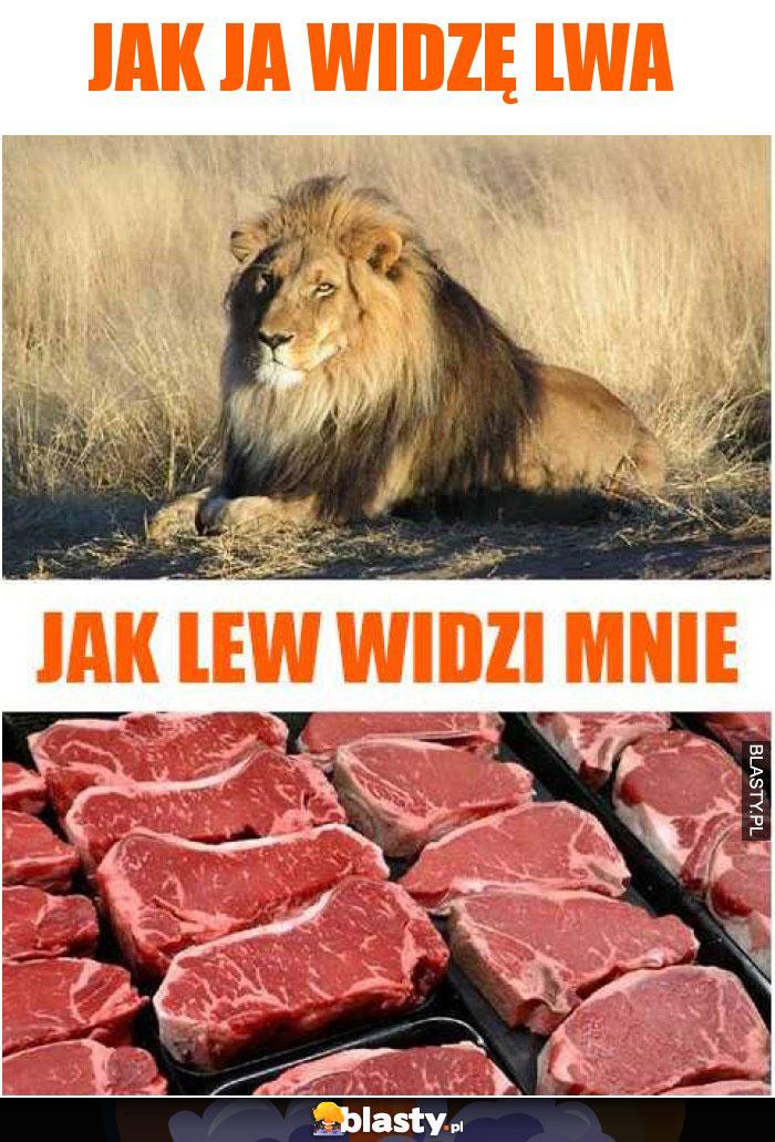Jak ja widzę lwa vs jak lew widzi mnie