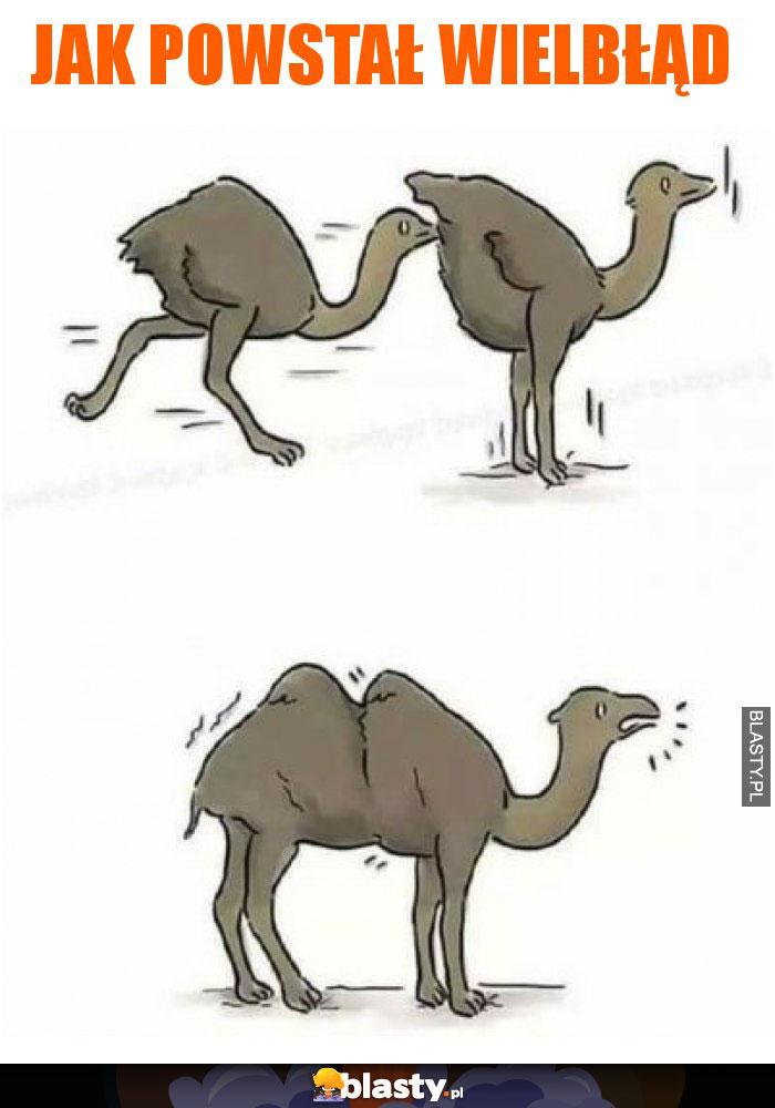 Jak powstał wielbłąd