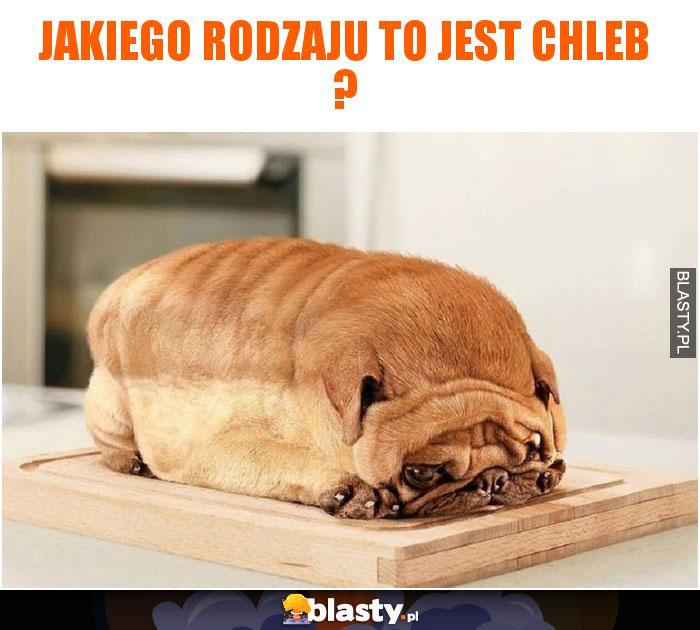 Jakiego rodzaju to jest chleb ?