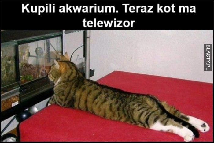 Kupiłem akwarium. Teraz kot ma telewizor
