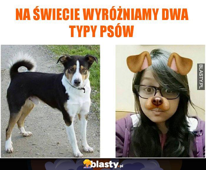 Na świecie wyróżniamy dwa typy psów