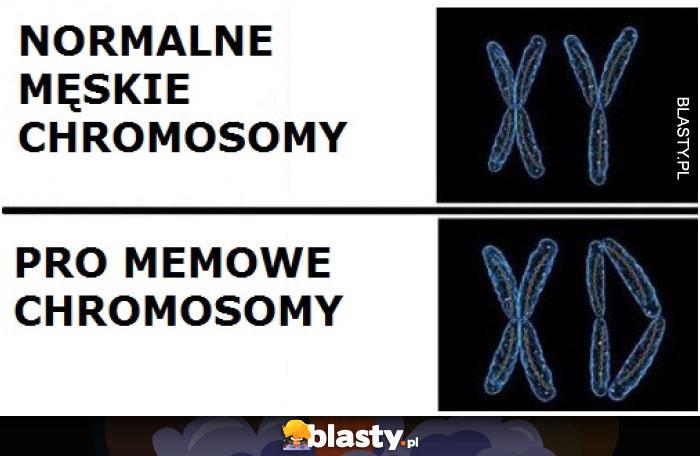 Normalne męskie chromosomy