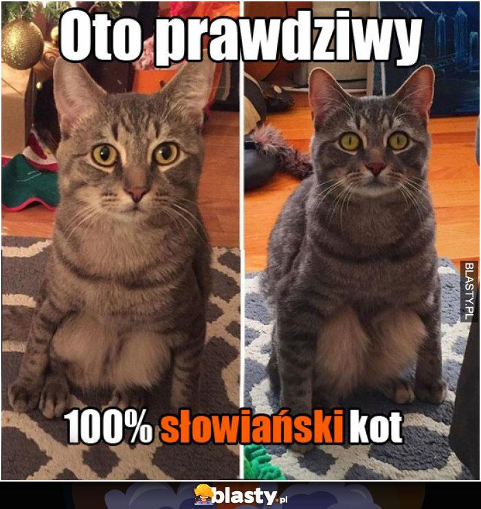 Oto prawdziwy 100% słowiański kot