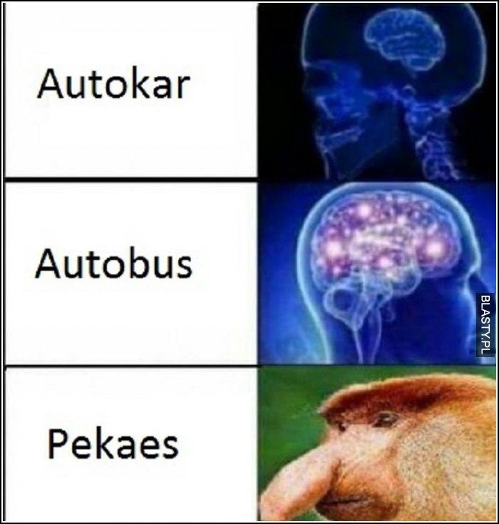 Pekaes