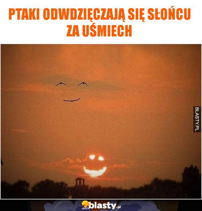 Ptaki odwdzięczają się słońcu za uśmiech