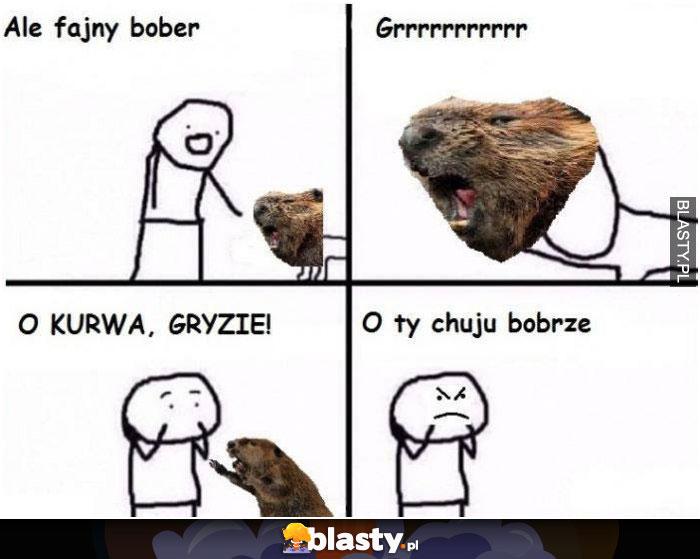 Ale fajny bober