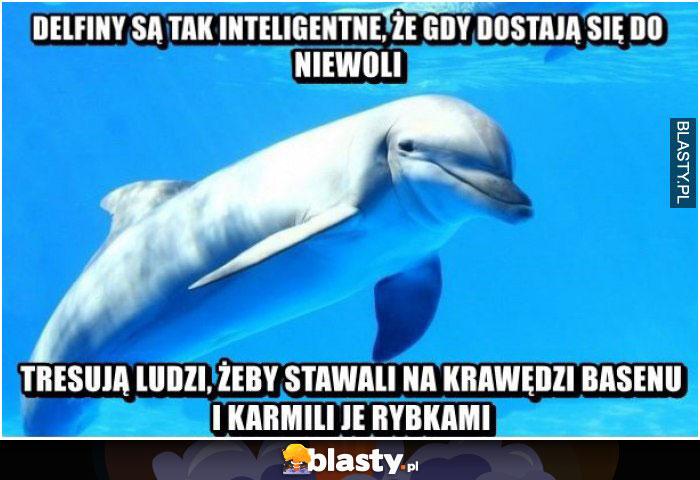 Delfiny są tak inteligentne