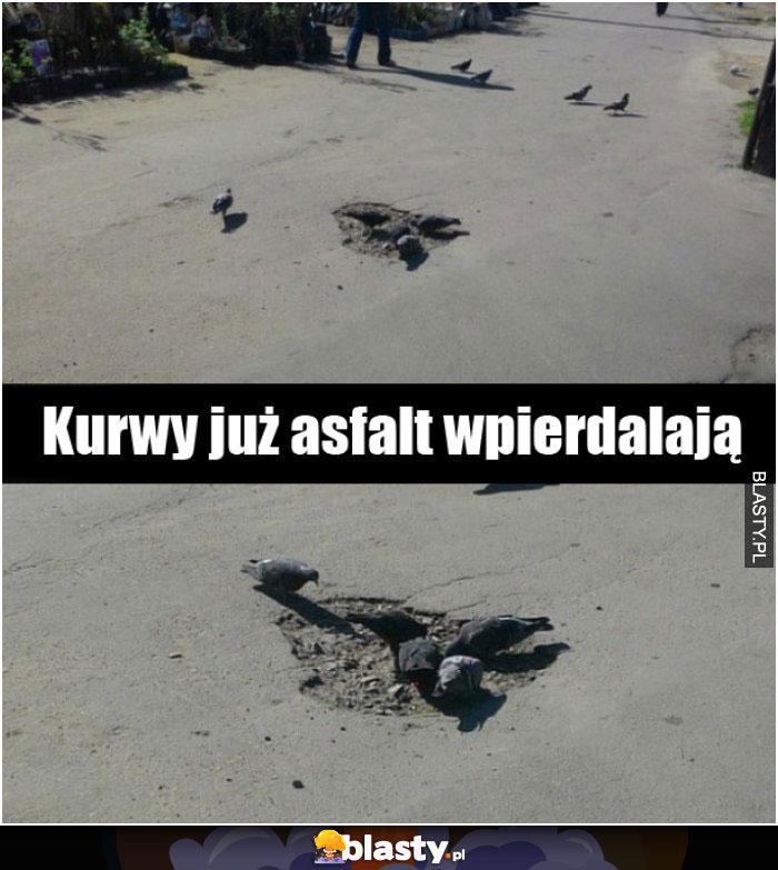 Gołębie już asfalt jedzą
