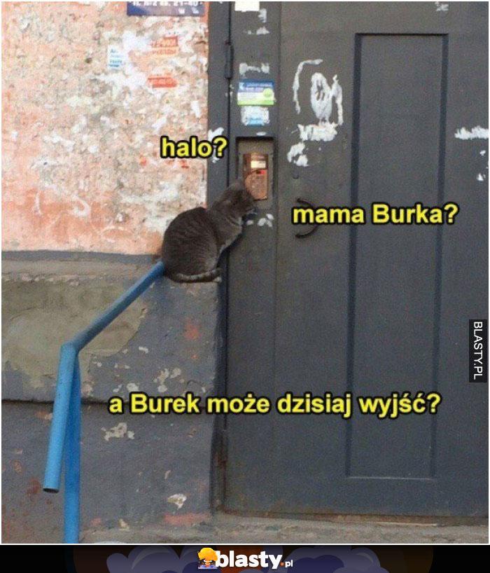 Halo - mama burka ?