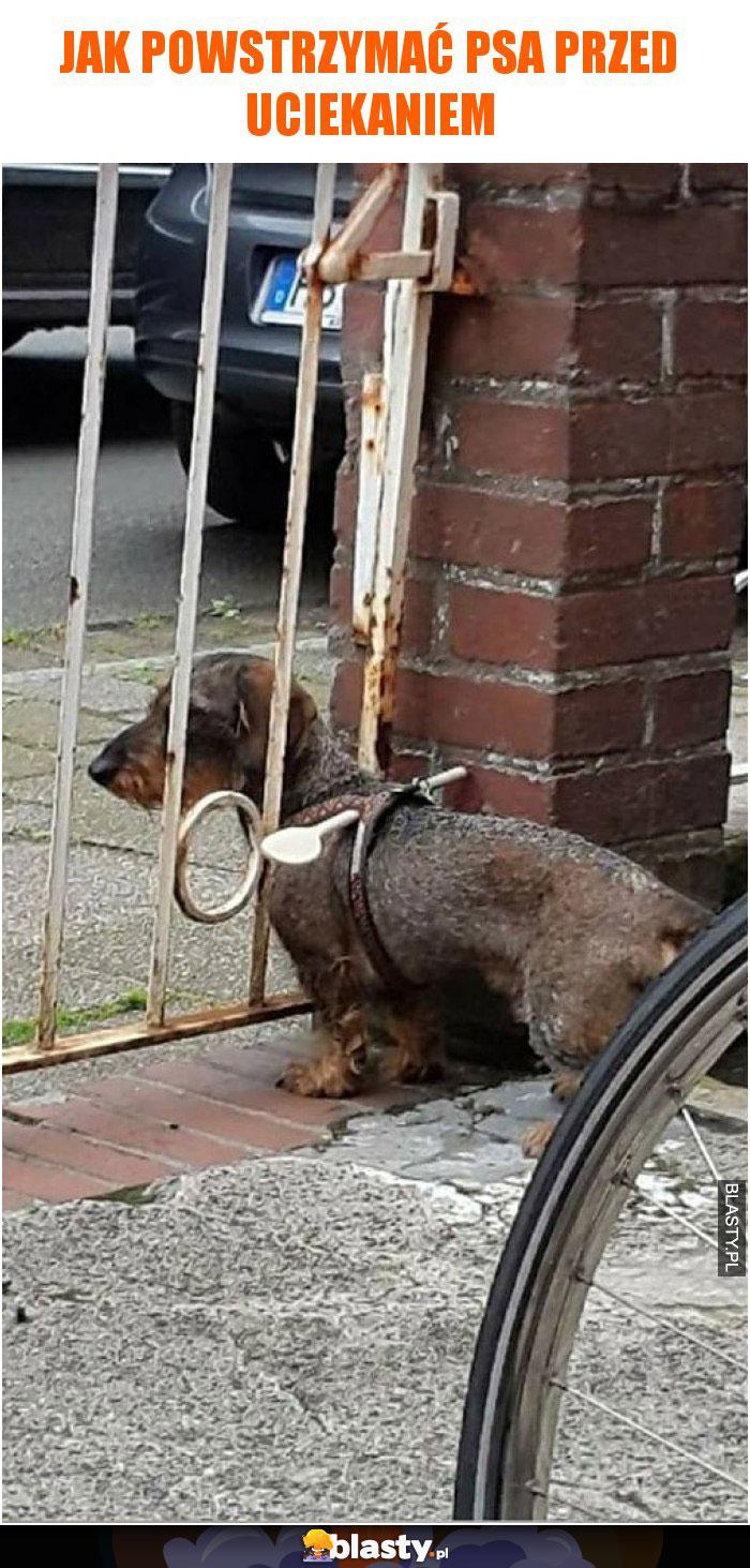 Jak powstrzymać psa przed uciekaniem