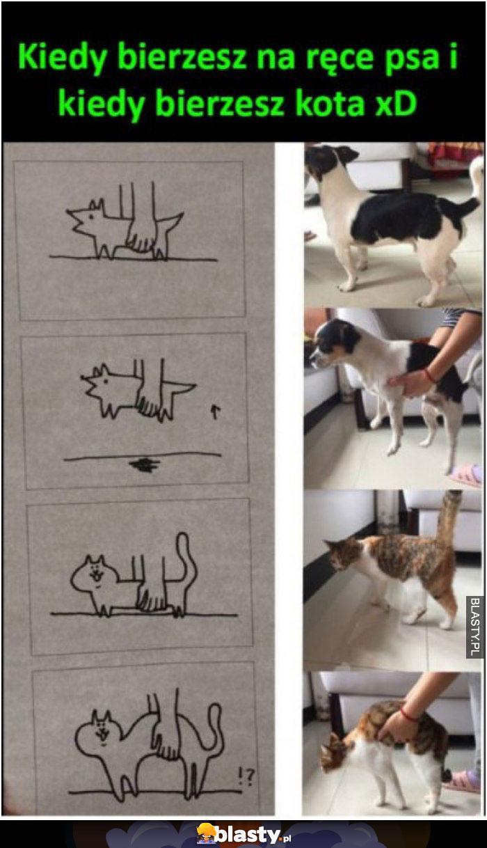 Kiedy bierzesz w ręce psa vs kota