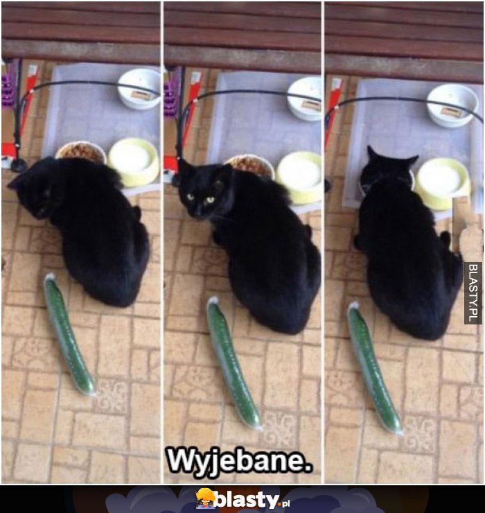 Kot ma wyjebane po całości