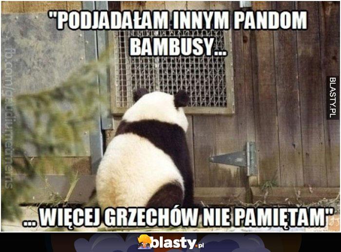 Podjadałem innym pandom bambusy więcej grzechów nie pamiętam