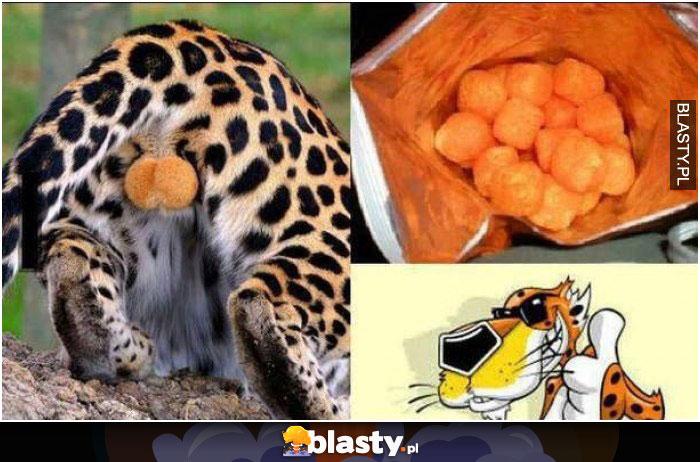 Skąd się biorą cheetosy