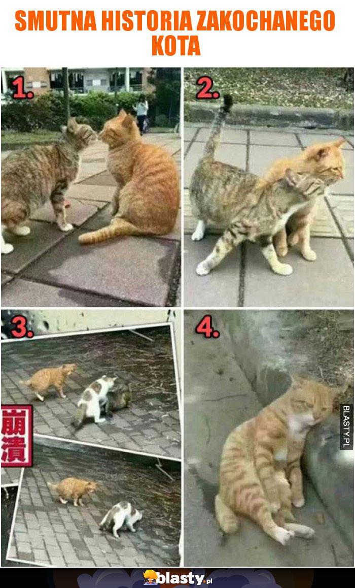 Smutna historia zakochanego kota