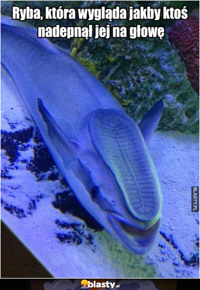Ta ryba wygląda tak jakby ktoś nadepnął jej na głowę