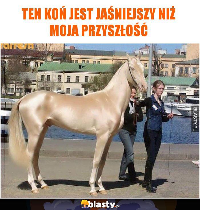 Ten koń jest jaśniejszy niż moja przyszłość