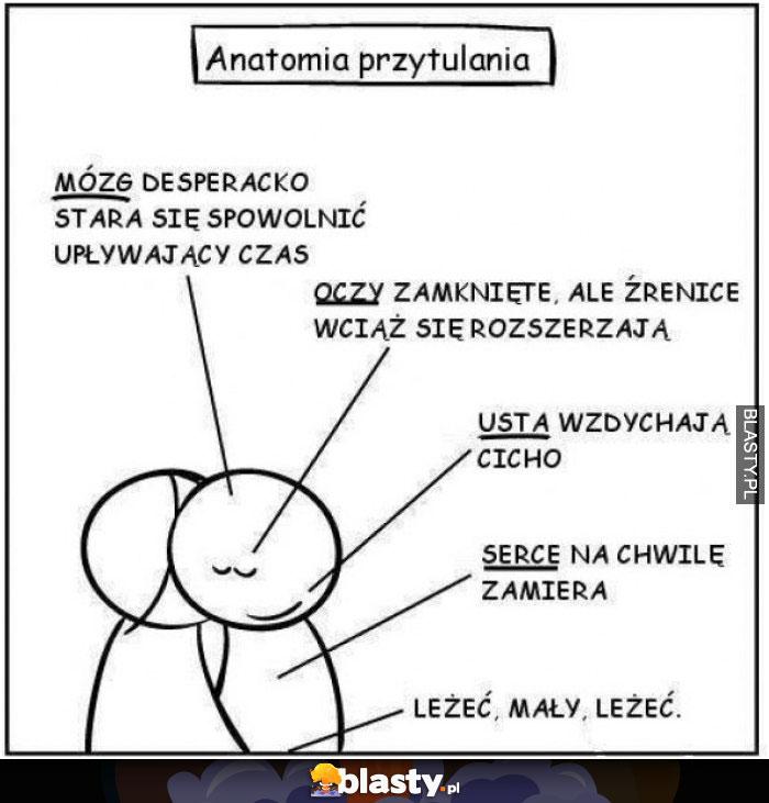 Anatomia przytulania