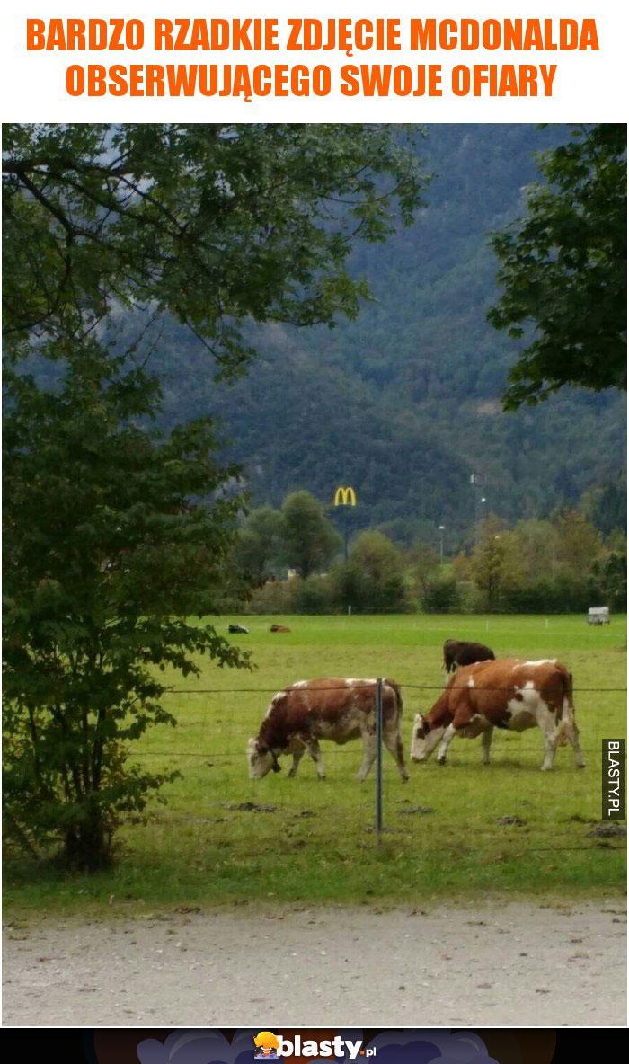 Bardzo rzadkie zdjęcie McDonalda obserwującego swoje ofiary