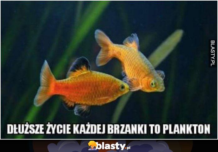 Dłuższe życie każdej brzanki to plankton