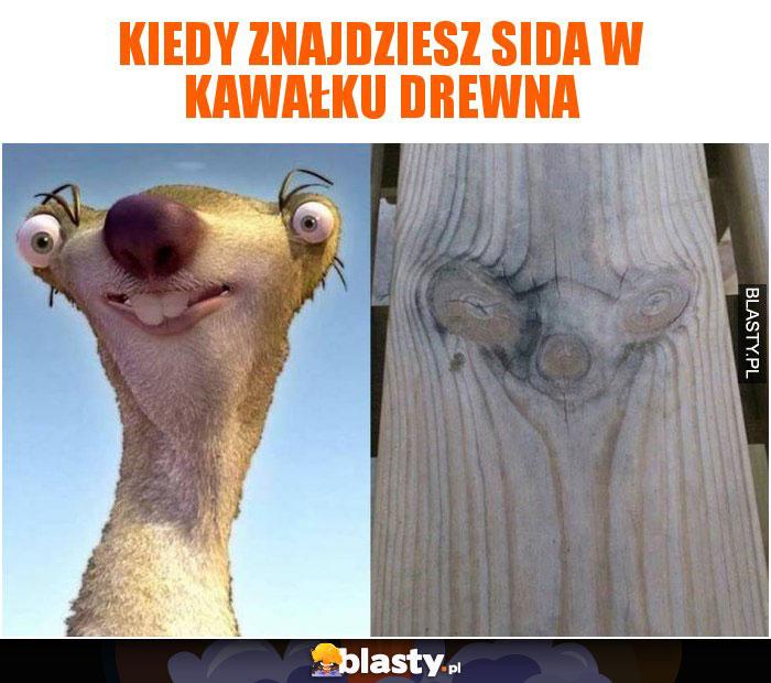 Kiedy znajdziesz Sida w kawałku drewna
