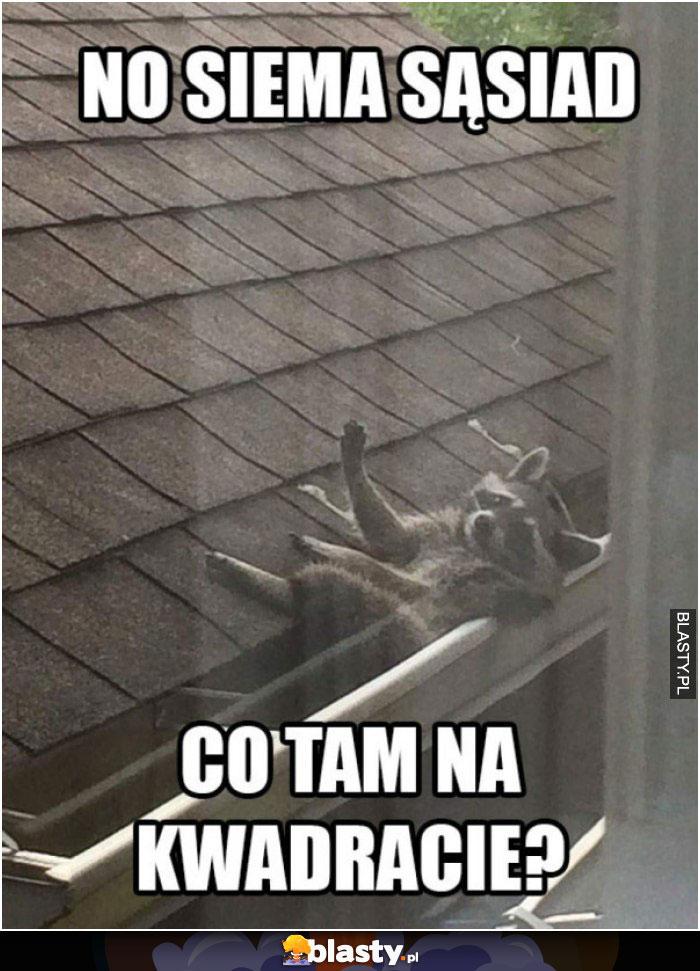 No siema sąsiad