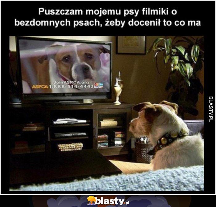 Pieseł przed telewizorem