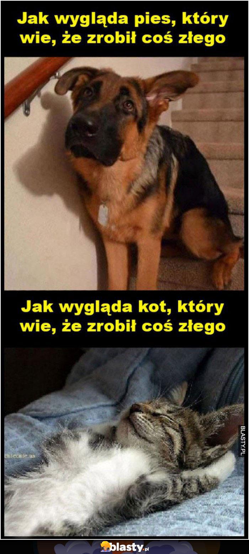 Tak wygląda pies, który wie, że zrobił coś złego