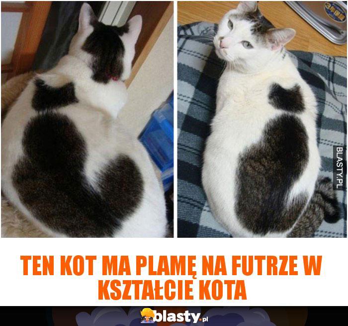 Ten kot ma plamę na futrze w kształcie kota