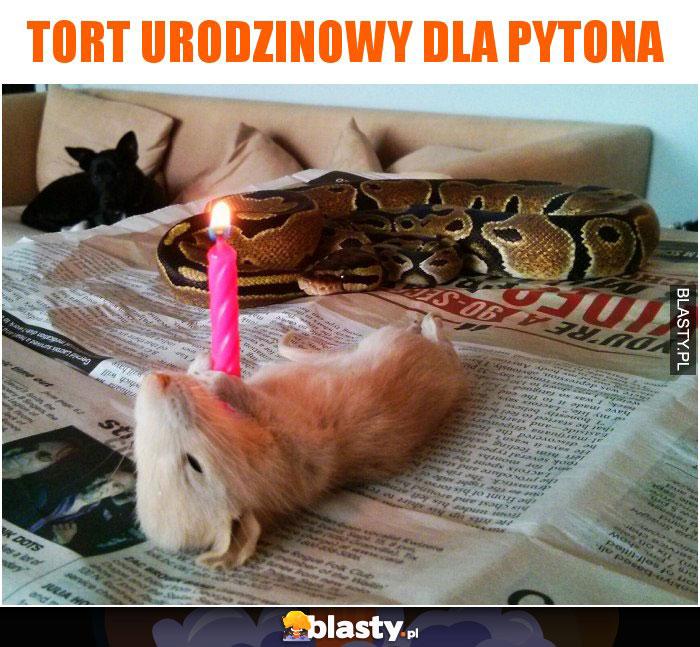 Tort urodzinowy dla pytona