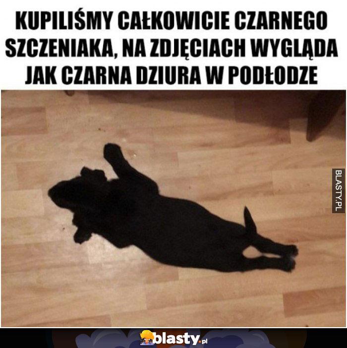 Czarny szczeniak