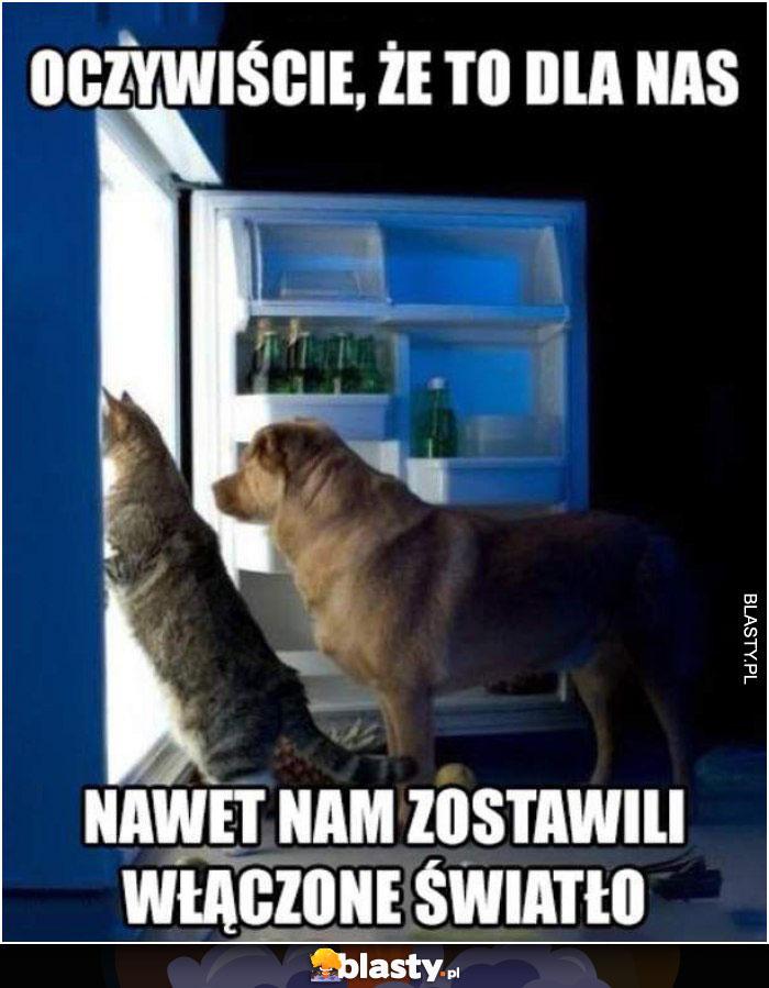 Kot w lodówce je jedzenie